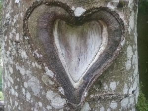 heart-946925_1280